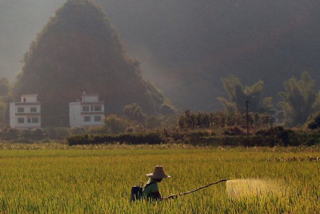 New research shows an ingredient in the pesticide Roundup can increase cancer risk by 41 percent. Pictured, a Chinese farmer sprays pesticide on a field of rice in Yangshuo, a city in Guangxi Zhuang Autonomous Region on October 8, 2011. File Photo by Stephen Shaver/UPI
