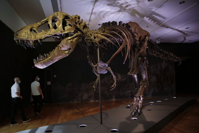 A Tyrannosaurus rex is on display Thursday at Christie's Auction House in New York City. Photo by John Angelillo/UPI
