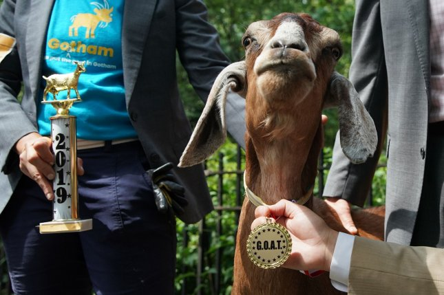 First place winner Massey the goat stands with her championship trophy and medal when Riverside Park Conservancy crowns a top goat at the first annual G.O.A.T awards ceremony Thursday in New York City. Photo by John Angelillo/UPI
