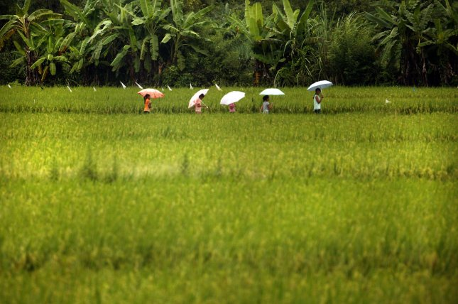 Young Chinese students walk home through a rice paddy In Daxin, Guangxi province, on July 3, 2009. (UPI Photo/Stephen Shaver)