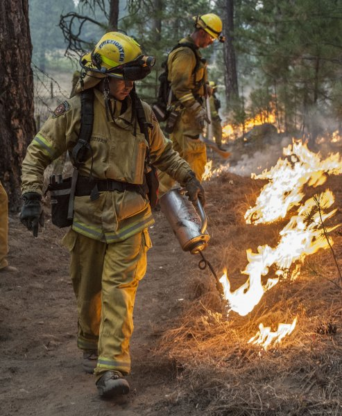 Firefighters from Sacramento Metro burn around an old cabin in Ackerson Meadow near Yosemite National Park, California on August 28, 2013. UPI/Al Golub