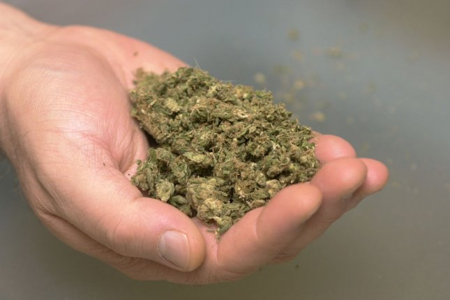 A man's hand can hold about 10 grams of marijuana. (File/UPI/Christine Chew)