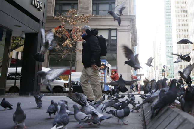 A masked man is pictured feeding a flock of pigeons on Fifth Avenue in New York City on November 19. Photo by John Angelillo/UPI