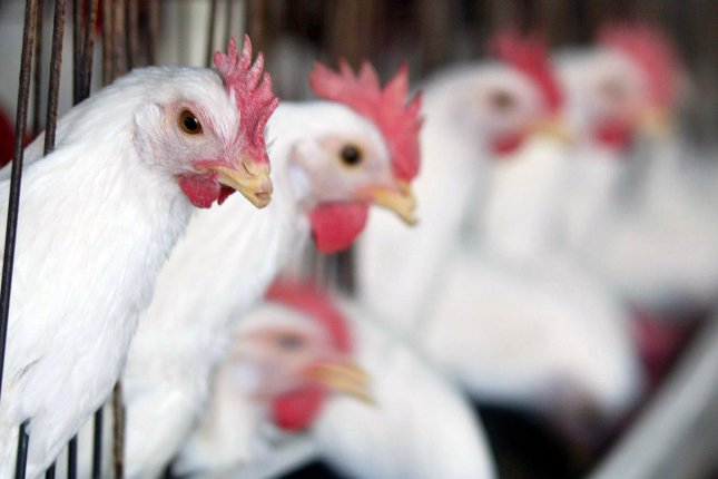 An outbreak of bird flu in South Korea has resulted in an egg shortage, which is being addressed by a large shipment of eggs to Asia's fourth-largest economy ahead of the Lunar New Year holiday. File Photo by Ismael Mohamad/UPI