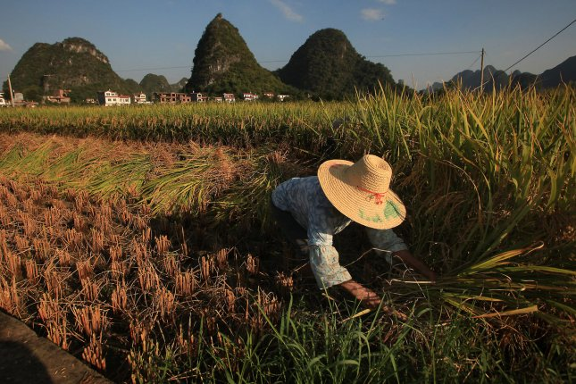 China is the world's largest producer and consumer of rice. New research suggests the staple is likely to lose its nutritional value as CO2 levels rise. Photo by UPI/Stephen Shaver