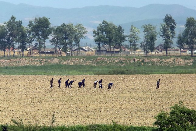 North Koreans work in the fields near Sinuiju, across the Yalu River from Dandong, China. A severe drought and extreme heat in 2018 has reduced food rations. File Photo by Stephen Shaver/UPI