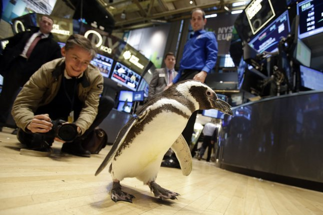 A SeaWorld Entertainment penguin walks on the floor of the New York Stock Exchange. The company said it is laying off 125 positions, some already vacant. File Photo by John Angelillo/UPI