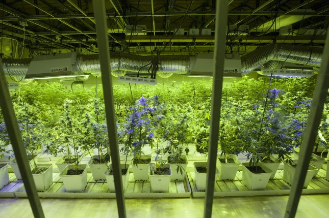 A prohibition on interstate use or cultivation of marijuana may no longer be necessary or proper to support the federal government's piecemeal approach, Thomas wrote in an opinion Monday.File Photo by Gary C. Caskey/UPI