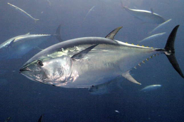 Pollutants in fish diminish human defenses against toxins, study says