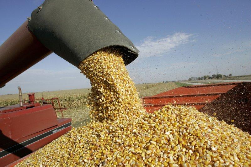 A Combine Unloads Corn On Farmland Near Manteno Illinois October 20 2008 For December Delivery Rose 0155 Per Bushel At The Chicago Board Of