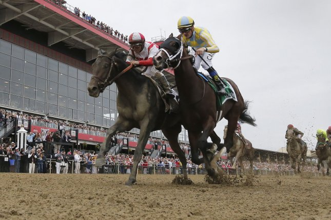Preakness Stakes winner Cloud Computing, ridden by Javier Castellano, might not run the third leg of the Triple Crown at Belmont. Photo by Mark Abraham/UPI