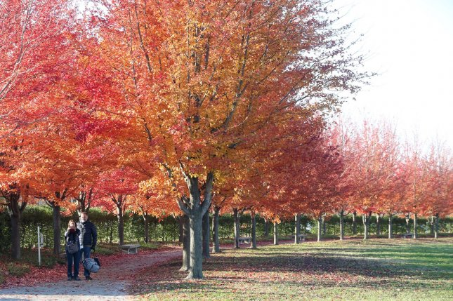 While color changes to trees during the fall is an annual highlight for many -- including the tourists pictured in Forest Park in St. Louis in November 2019 -- researchers say the human body only registers two seasons, not the four marked on the calendar. Photo by Bill Greenblatt/UPI