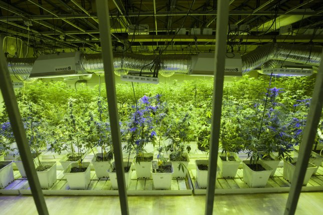 Lawmakers in the lower house of Dutch Parliament on Tuesday narrowly approved legislation to tolerate the cultivation of marijuana -- a measure intended to close legal loopholes pertaining to the sale of pot and make it safer for shops that now have to rely on criminal networks to purchase pot. File Photo by Gary C. Caskey/UPI