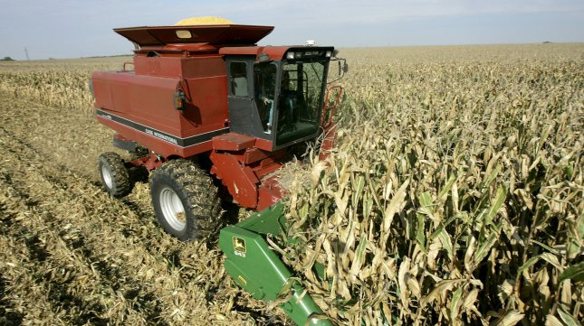 Brad Weber Harvests Corn On Land He Rents Near Manteno Illinois October 20 2008 Farms 450 Acres Part Time But Hopes To Acquire More So That