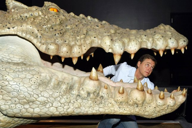 Academy Award-winning animatronics expert John Cox checks the teeth of the crocodile head at his new display Monsters that shows how cinematic creatures are made from storyboard to full size specimens, at the St. Louis Science Center . (File/UPI Photo/Bill Greenblatt)