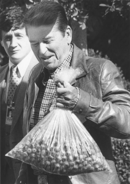 President Reagan returned to the White House October 16, 1983 from Camp David, carrying a bag full of acorns he says he will feed to the squirrels outside the oval office. (UPI Photo/Mal Langsdon/FILES)