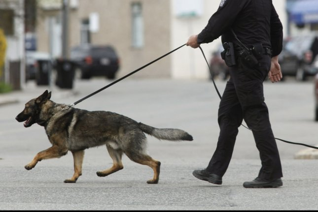 A police dog in Watertown, Massachusetts. (File/UPI/Matthew Healey)
