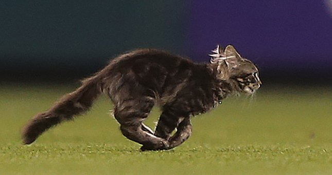 A kitten runs onto the field in the sixth inning during the Kansas City Royals-St. Louis Cardinals baseball game at Busch Stadium in St. Louis on August 9, 2017. The team reported the kitten was missing the next day after a fan attempted to take it home after the game. Photo by Bill Greenblatt/UPI