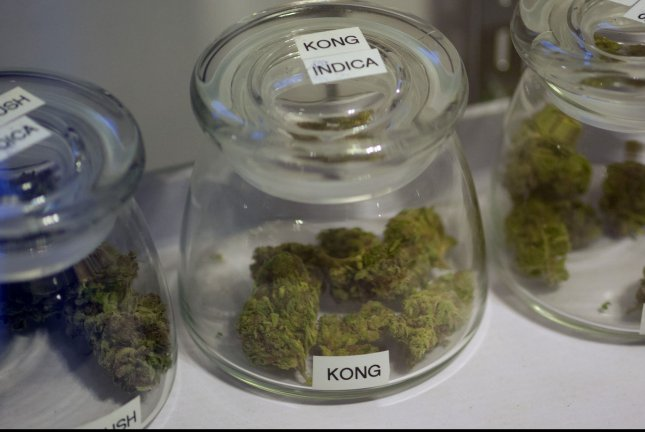 Sample buds of marijuana flowers are displayed in glass containers. File Photo by Gary C. Caskey/UPI