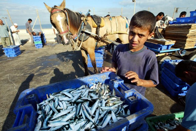 A Palestinian boy watches over the day's catch at a local fish market near the Gaza City harbor. New research suggests the official numbers for the annual haul of fish from the world's oceans, or global catch, fail to account for artisanal, subsistence and illegal fishing. File photo by Ismael Mohamad/UPI