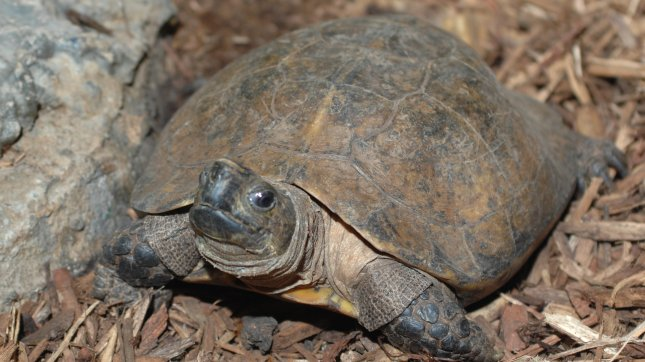 Turtles unhappy after century together
