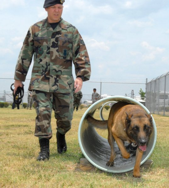 Staff Sgt. Shawn Elliott trains military working dog, Bosco, at Randolph Air Force Base, Texas on June 20, 2008. Bosco began service in August 2002 and will transfer to Lackland Air Force Base to perform various duties with the 431st Training Squadron. (UPI Photo/Rich McFadden/U.S. Air Force)