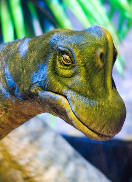 A animatronic baby Brachiosaurus from the late Jurassic period. Scientists think that some dinosaurs could have produced methane by passing a lot of gas. (UPI Photo/Heinz Ruckemann)