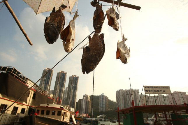 Fish are hung up to dry in Hong Kong's Aberdeen Harbor on October 13, 2014. A new study says that some freshwater male fish are displaying female characteristics as a result of chemicals being flushed into river streams. File Photo by Stephen Shaver/UPI