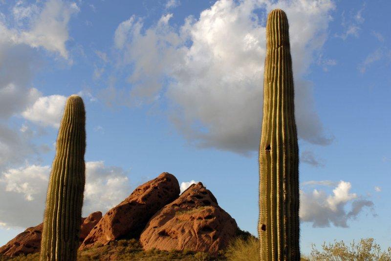 The mountains of Papago Park are seen near two Saguaro cacti in Phoenix, Arizona on January 30, 2008. (UPI Photo/Alexis C. Glenn)