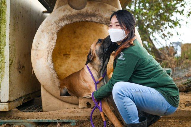 A rescue worker is nuzzled by a dog at a meat farm in Haemi, South Korea, on October 22, 2020. Humane Society International rescued the farm's dogs and moved them to the United States and Canada for adoption. File Photo by Thomas Maresca/UPI