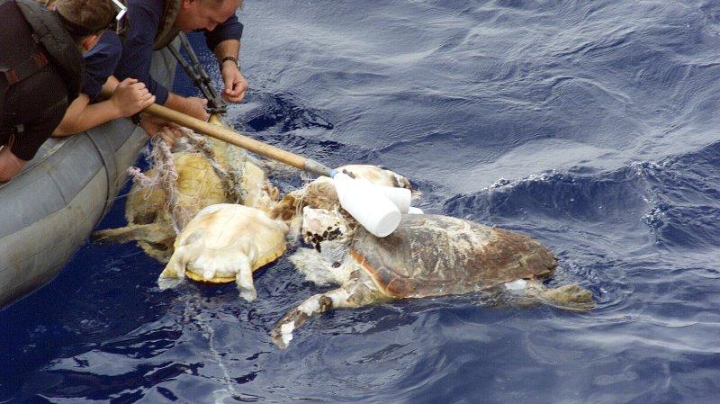 Man-made pollutants threaten sea turtles