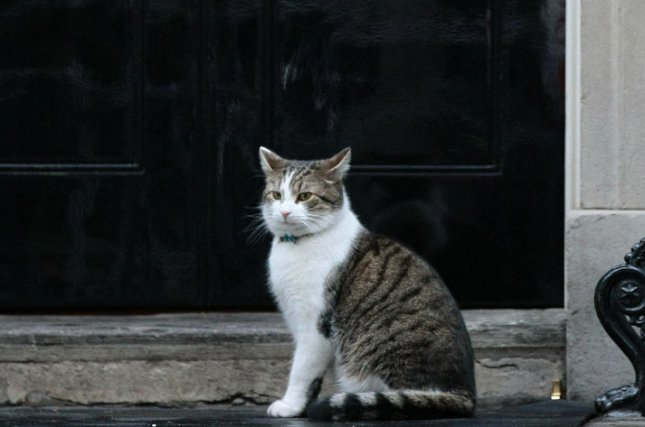 Larry the Downing Street cat waits outside the famous door while British Prime Minister David Cameron meets his Italian counterpart Mario Monti at No.10 Downing Street on January 18, 2012 in London. A Cabinet Office spokeswoman confirmed that Larry would maintain his post as chief mouser after Cameron is replaced as prime minister by Theresa May on Wednesday. File Photo by Hugo Philpott/UPI