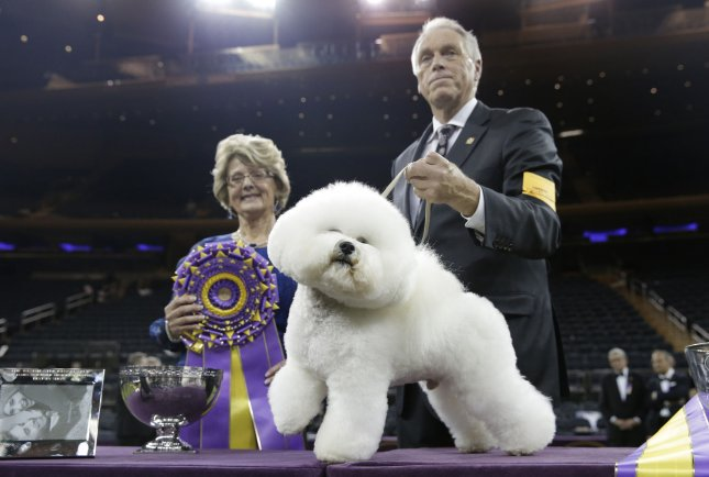 Dogs face off at the Westminster Kennel Club Dog Show