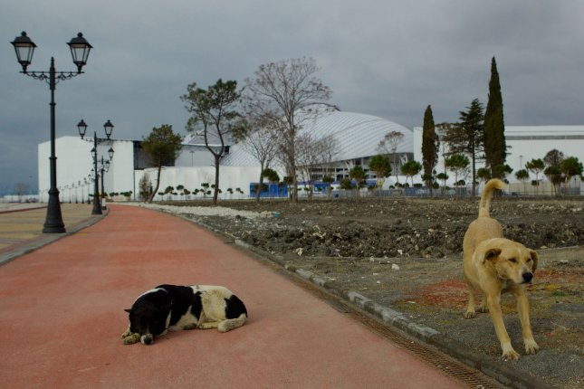 Stray dogs rest on the pathway along the shoreline outside of Olympic Park as preparations continue prior to the start of the Sochi 2014 Winter Olympics on February 2, 2014 in Sochi, Russia. The Sochi 2014 Olympics will open on February 7, 2014. UPI/Molly Riley