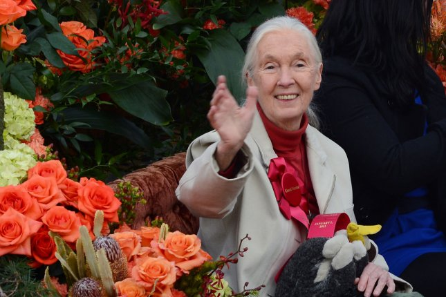 Jane Goodall, the world's foremost expert on chimpanzees, said there's a very small window for humanity to save the world from catastrophic climate change. File Photo by Jim Ruymen