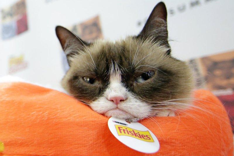 No one pointed a gun at this cat, it's just grumpy. (File/UPI/John Angelillo)
