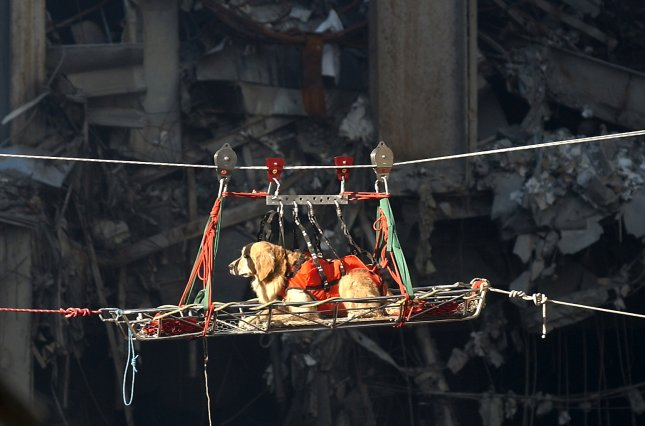 A rescue dog is transported out of the debris of the World Trade Center on Sept. 15, 2001, in New York. Researchers say dogs that worked at the Sept. 11 attack sites have fared as well as dogs that didn't work there. Photo by Preston Keres/U.S. Navy