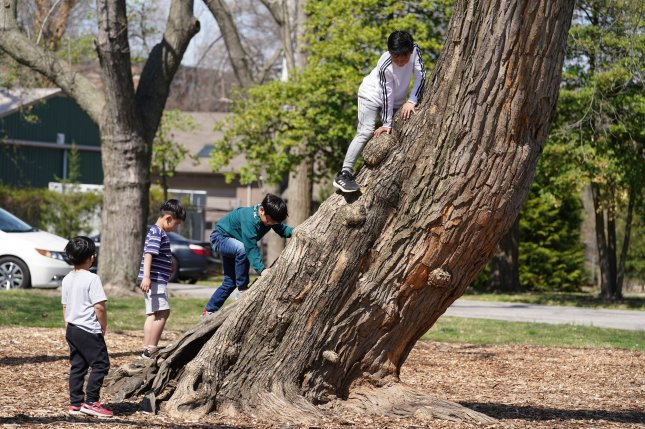Children climb a large, leaning tree in Tower Grove Park in St. Louis. File Photo by Bill Greenblatt/UPI