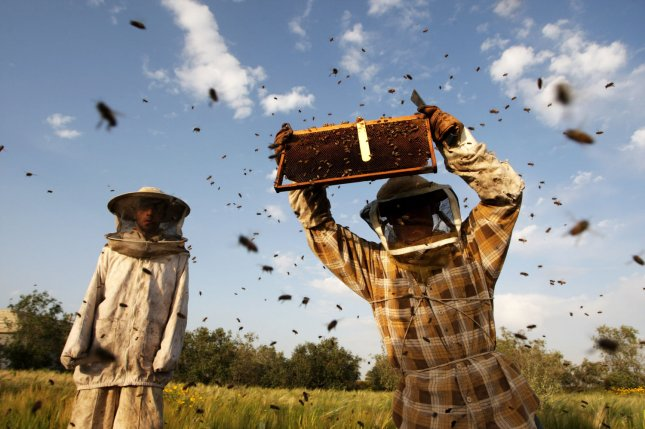 A honeybee farm in South Carolina lost more than 3 million honeybees due to the aerial spraying of an insecticide that targets Zika-carrying Aedes Aegypti mosquitoes. File photo by Ismael Mohamad/UPI