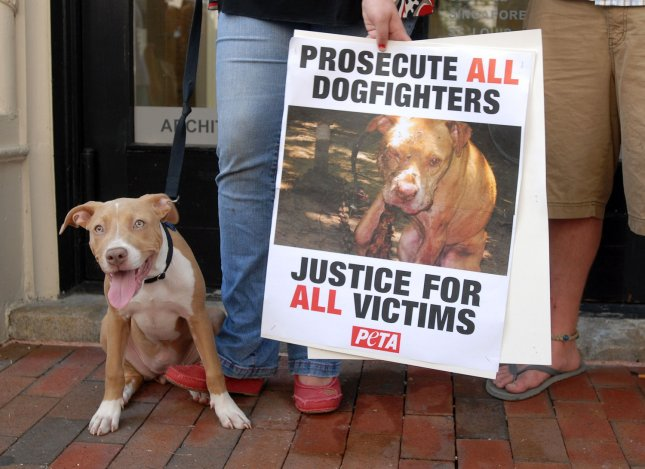 Cupcake, a Pit Bull, joins anti-dog fighting protesters waiting for Atlanta Falcons quarterback Michael Vick to arrive at federal court in Richmond, Virginia, on July 26, 2007. Vick is accused of being involved with dog fights on his Virginia property. (UPI Photo/Roger L. Wollenberg)