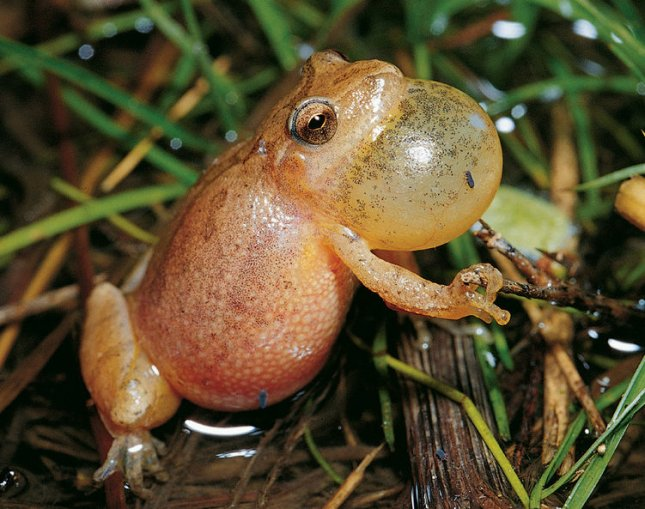 What is an Amphibian? - Definition & Characteristics ...