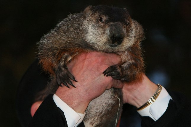 Punxsutawney Phil, on his 130th anniversary, predicted an early spring, though don't break out the Bermuda shorts yet. The groundhog has accurately predicted the length of winter only 39 percent of the time. File Photo by George M Powers/UPI