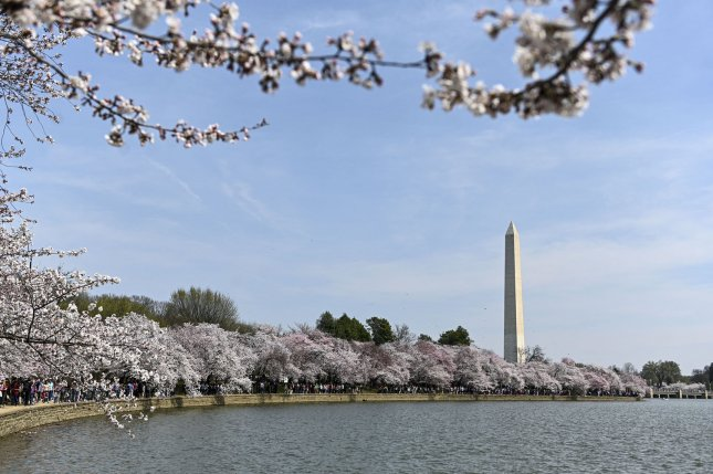 Officials expect the peak of the cherry blossoms at the National Mall in Washington, D.C., to be in late March this year.File Photo by Leigh Vogel/UPI