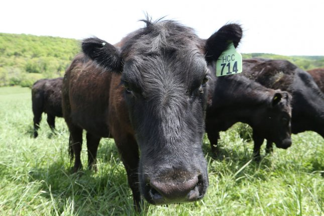 Producer prices for beef and veal increased10.5% in May. File Photo by Bill Greenblat/UPI