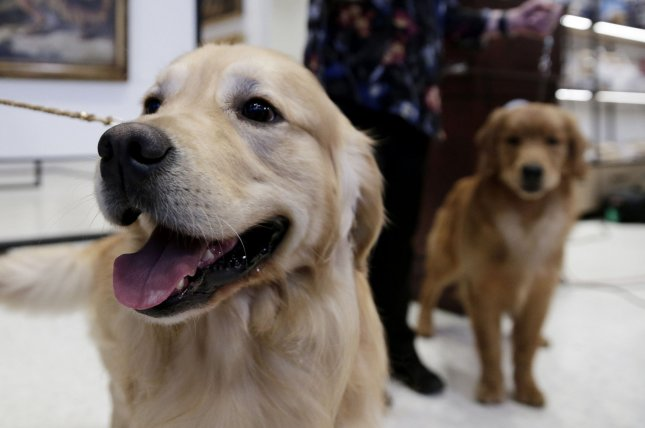 New research suggests people brought their domesticated dogs with them to the Americas more than 15,000 years ago, new research suggests. File Photo by John Angelillo/UPI