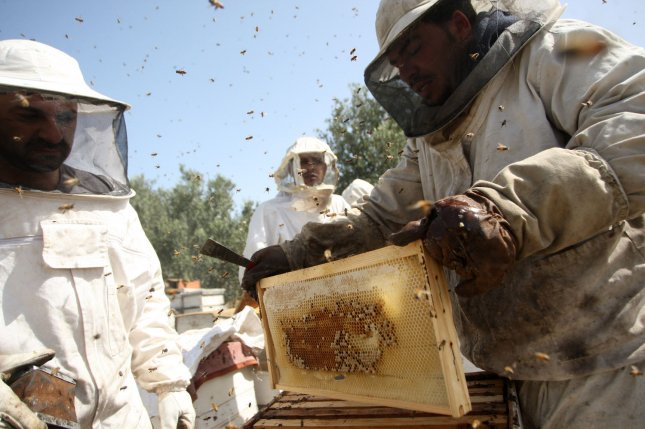 Beekeepers in China are losing a much smaller number of colonies than are beekeepers in the U.S. and Europe. Photo by Ismael Mohamad/UPI