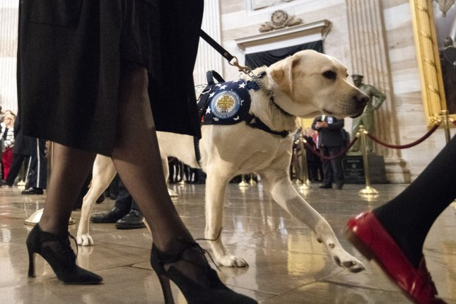 Sully, the service dog for former President George H.W. Bush, walks with the Americans with Disabilites group after they viewed the coffin of the 41st president as he lies in state at the U.S. Capitol rotunda in Washington, D.C., on Tuesday Photo by Pat Benic/UPI