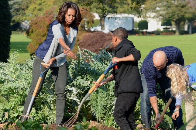 First lady Michelle Obama uses a pitchfork to dig up sweet potatoes as she and White House Chef Sam Kass (R) help school children in the annual fall harvest of the White House Kitchen Garden on the South Lawn of the White House in Washington, D.C. (File/UPI/Pat Benic)
