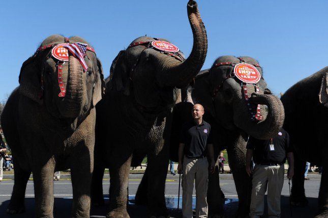 Elephants march down 3rd Street in front of the U.S. Capitol Building during Ringling Brothers and Barnum and Bailey Circus's annual Pachyderm Parade to kick-off their D.C. shows, in Washington on March 16, 2010. (UPI/Kevin Dietsch)
