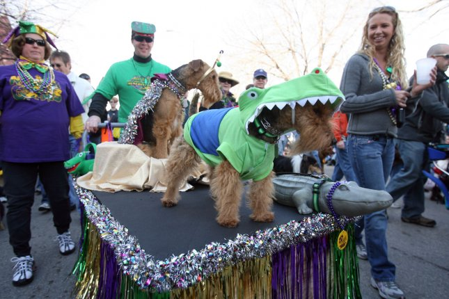 Rosie the Welsh Terrier gets alot of attention dressed as an alligator during the Barkus Pet Parade in St. Louis on January 27, 2008. The pet parade which attracts hundreds of dogs, is one of the largest in the world. (UPI Photo/Bill Greenblatt)